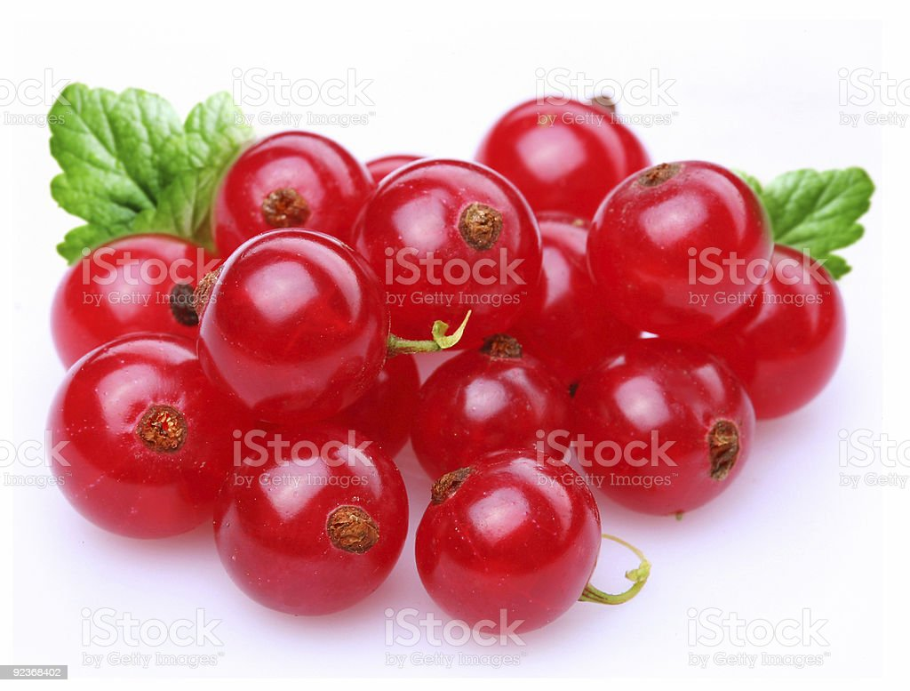 Currant red stock photo