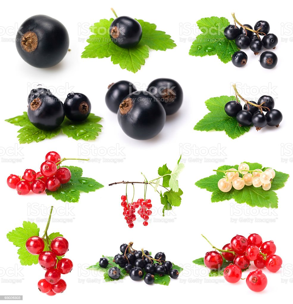currants collection royalty-free stock photo