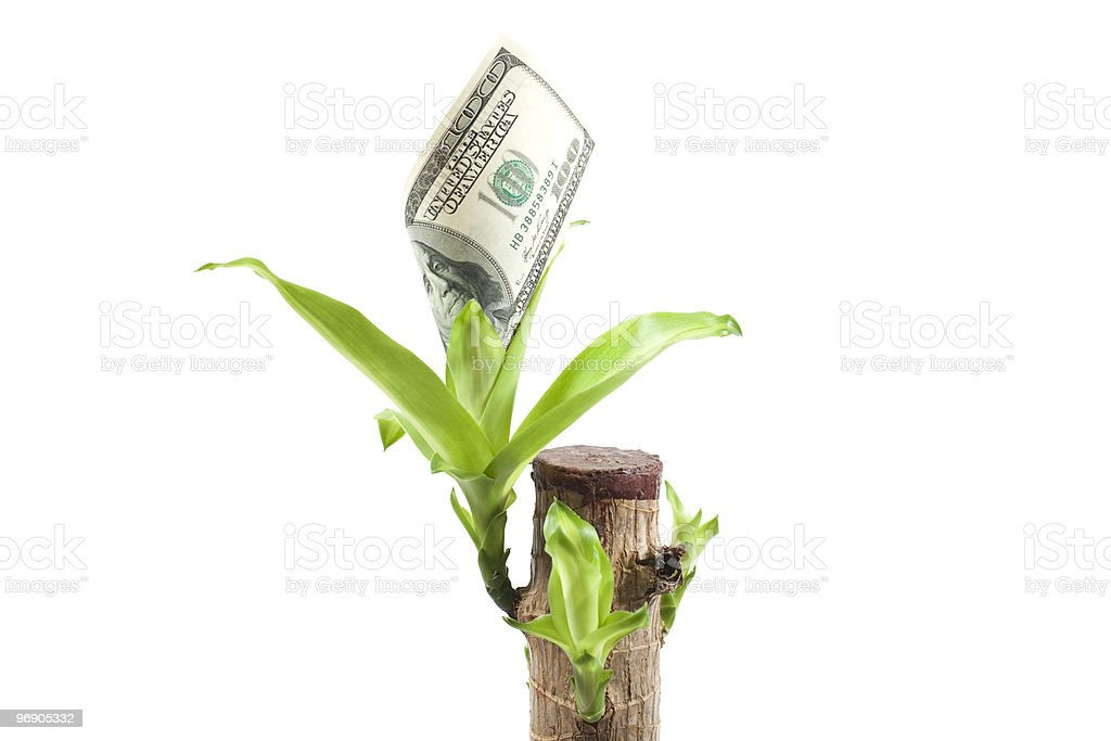 currency  plant with growing dollars royalty-free stock photo