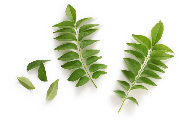 árvore de folhas de curry, curry - caril - fotografias e filmes do acervo