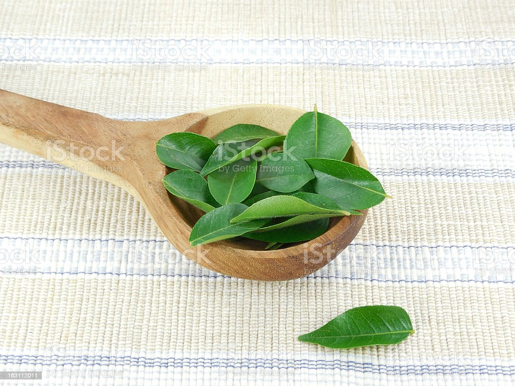 Curry Leaves royalty-free stock photo