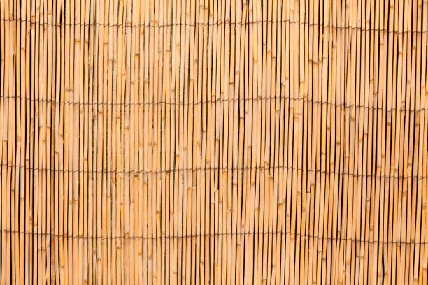 Curtain screen of reedsV – Foto