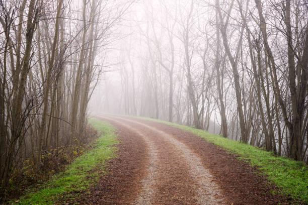 Kurve entlang eines von Bäumen gesäumten Feldwegs im Winter mit Morgennebel bedeckt – Foto