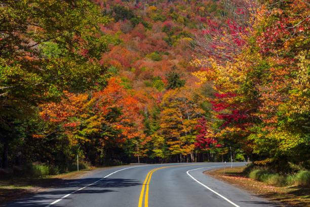 curve in de weg door kleurrijke bos in de herfst. - dixville notch stockfoto's en -beelden