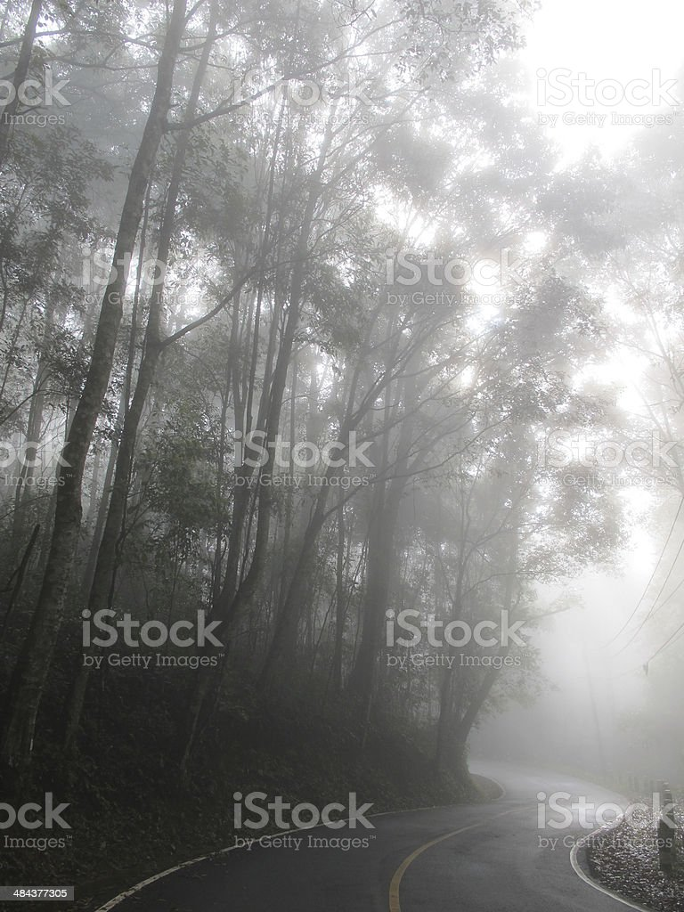Curve road in the mist stock photo
