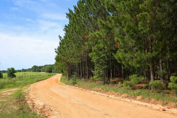 Curved farm road stock photo