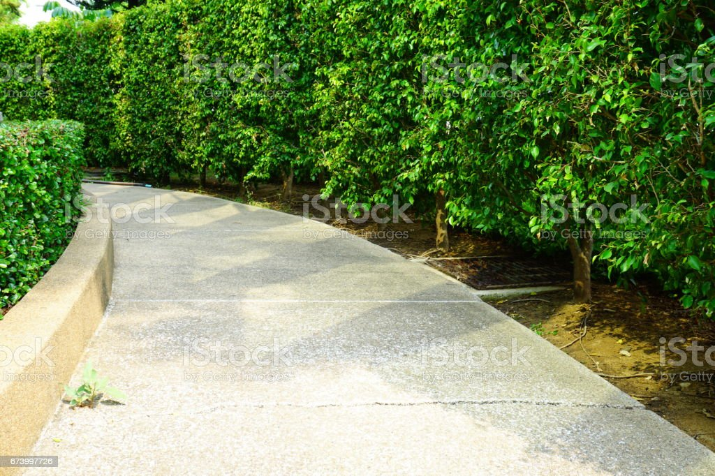 Curved hedges in fancy garden royalty-free stock photo