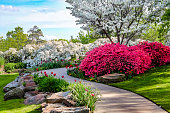 istock Curved path through banks of Azeleas and under dogwood trees with tulips under a blue sky - Beauty in nature 1024139884