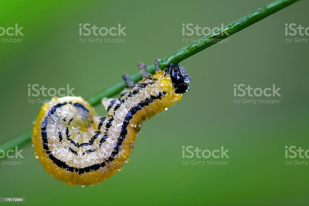 curved royalty-free stock photo