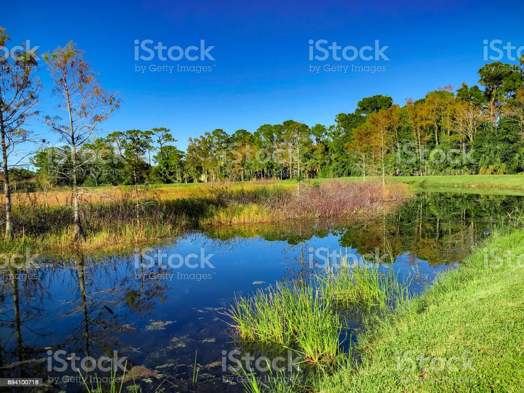 curved river in marsh stock photo