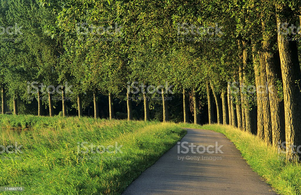 Curved Road with Trees royalty-free stock photo