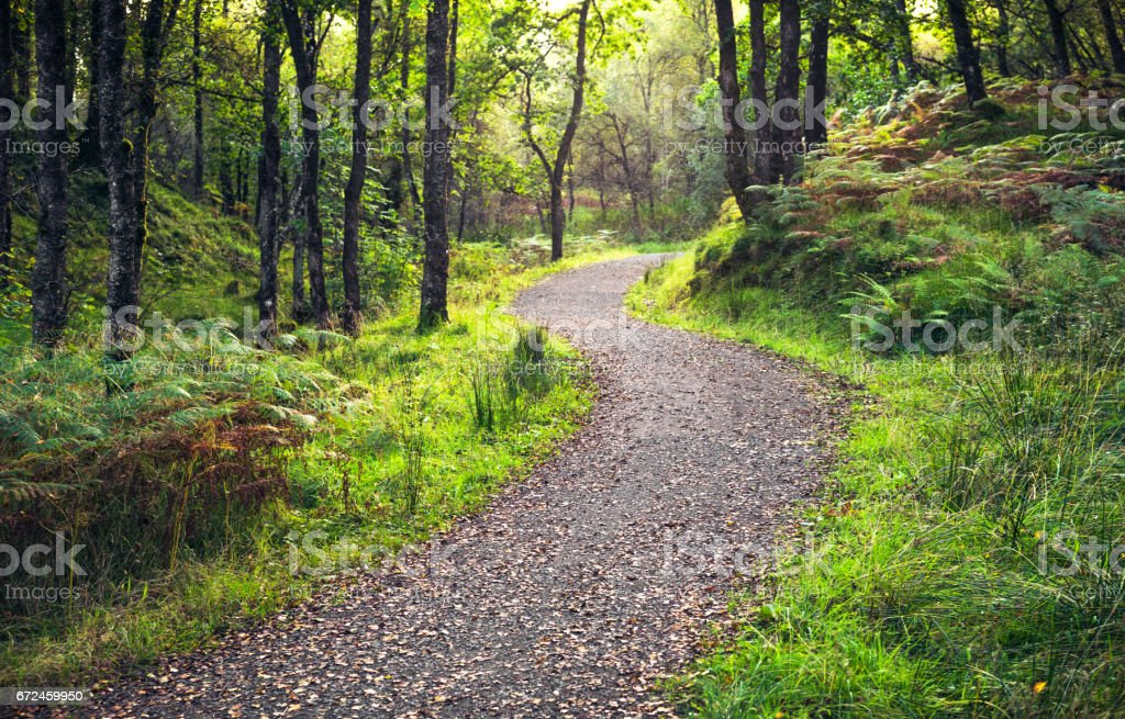 Curving forest footpath stock photo
