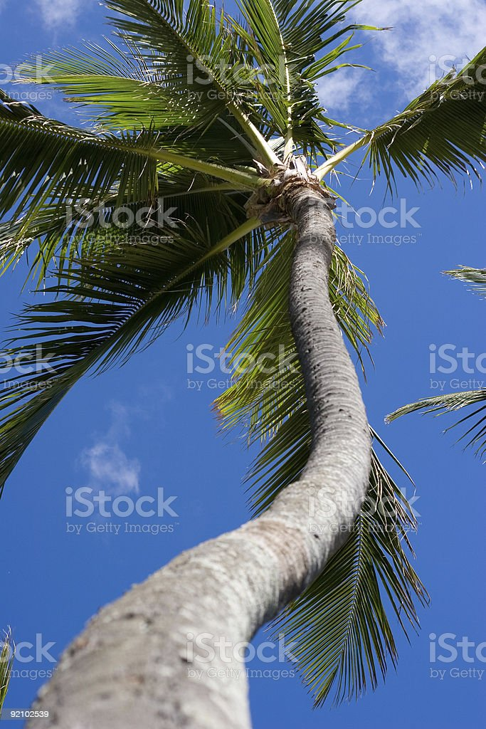 Curvy Palm stock photo