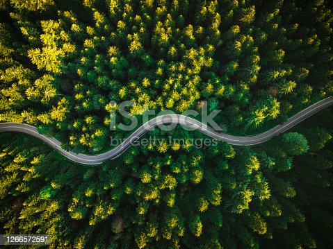 Curvy Road in Summer Pine Forest. top Down Drone Photography. Outdoor Wilderness.