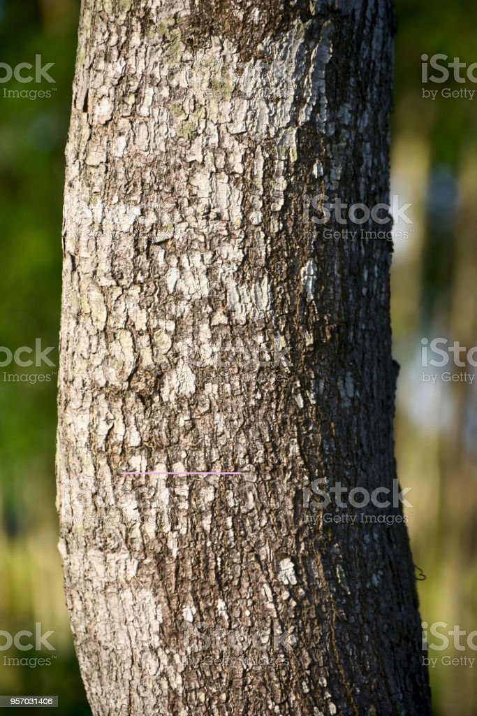 A curvy tree parts isolated unique photo stock photo