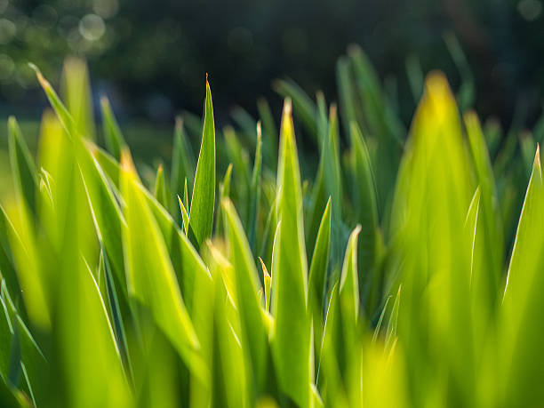 cusp green leaves cusp green leaves cusp stock pictures, royalty-free photos & images