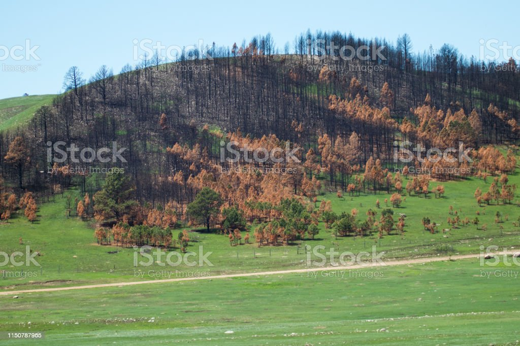 Custer State Park after forest fire - Royalty-free Custer State Park Stock Photo