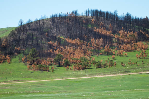 Custer State Park after forest fire stock photo