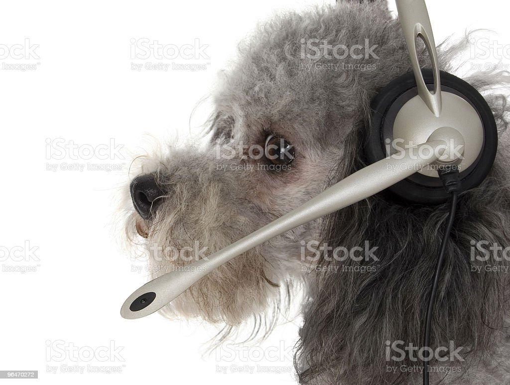 Customer Service Pup royalty-free stock photo