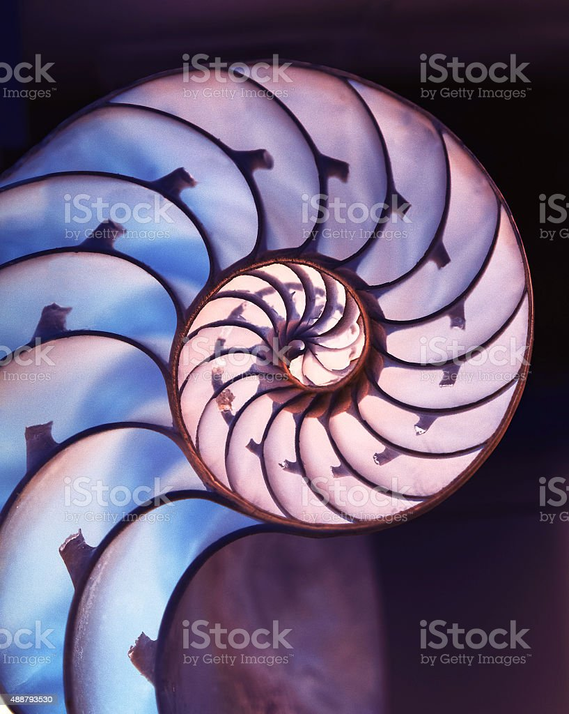 Cut away of Nautilus shell on magic background stock photo