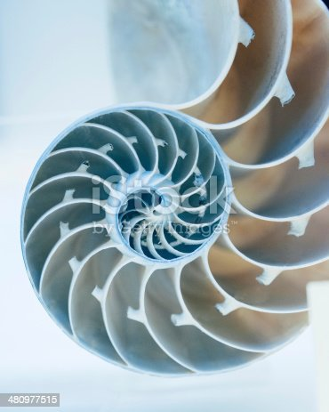 Cut away of Nautilus shell on a light blue background