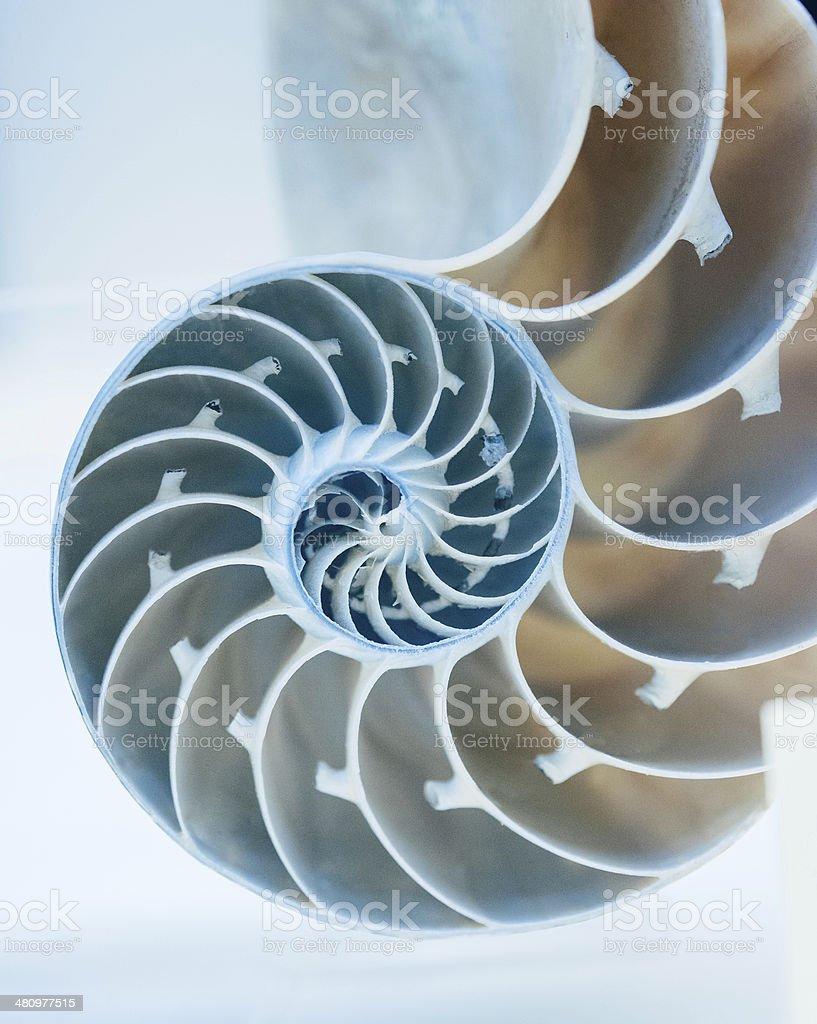 Cut away of Nautilus shell stock photo