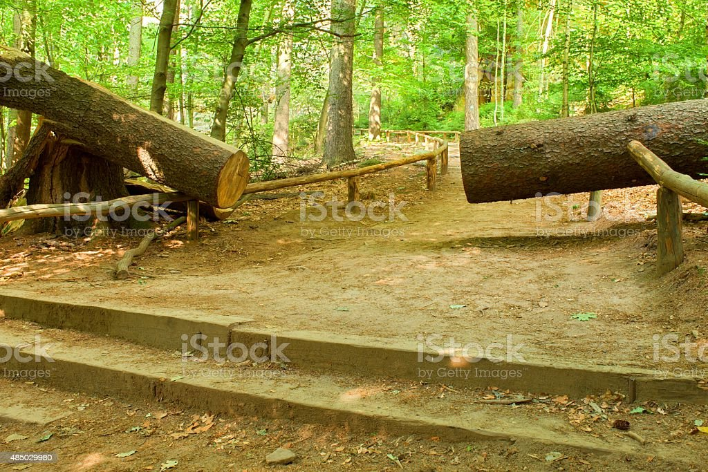 Cut big tree fallen down to little path in forest stock photo