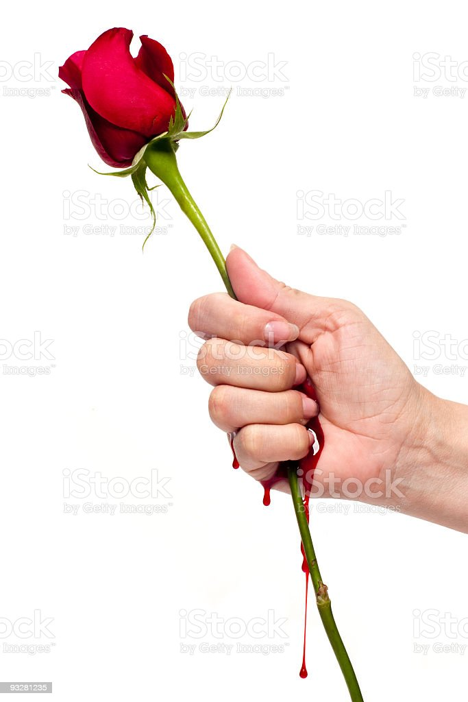 Cut by a rose stock photo