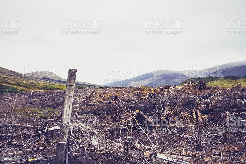 Cut down forest with mountain in background royalty-free stock photo