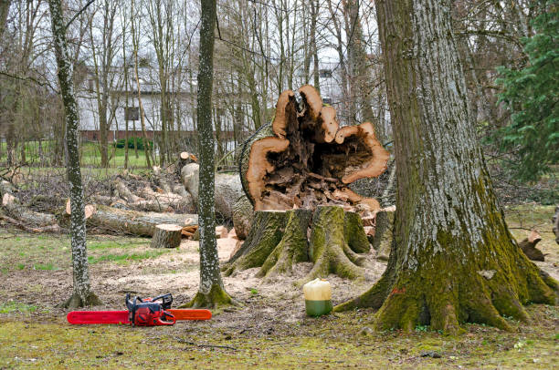 cut down hollow tree stock photo