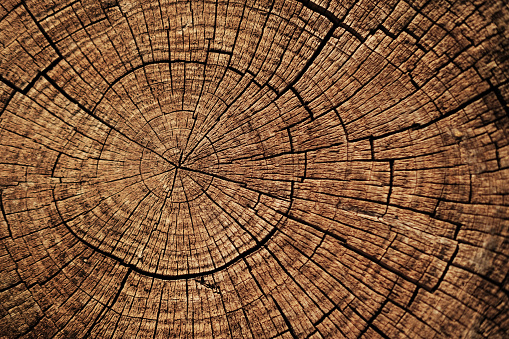 Cut down tree circle rings texture background.