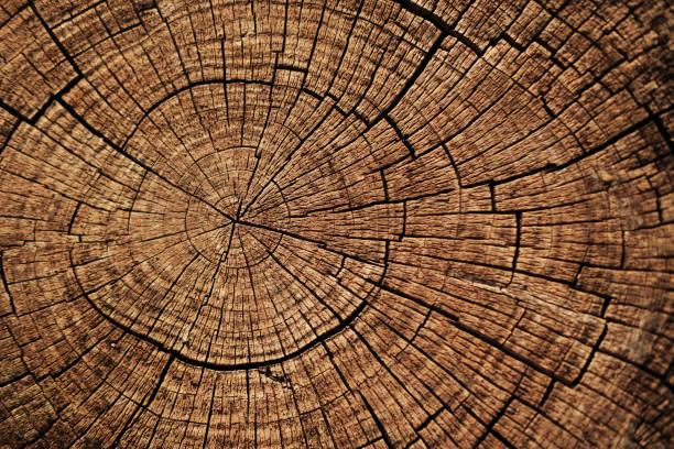 kesilmiş ağaç daire aşağı doku arka plan halkalar. - ağaç kabuğu bitki bölümü stok fotoğraflar ve resimler