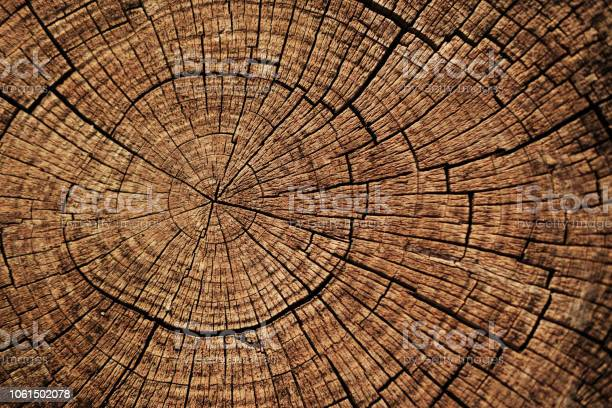 Photo of Cut down tree circle rings texture background.