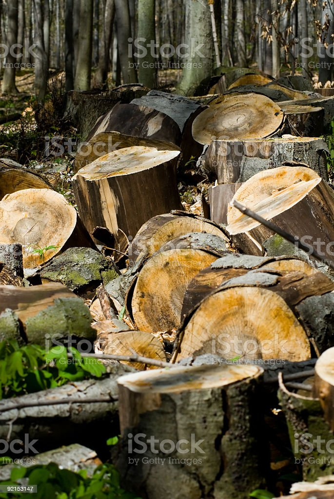 Cut Firewood royalty-free stock photo