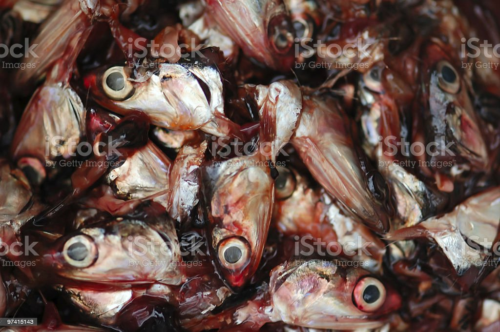 cut fish heads royalty-free stock photo
