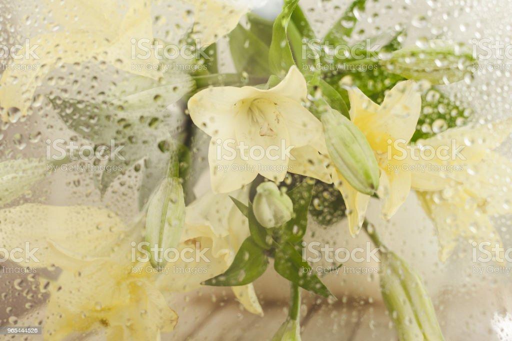 Cut flowers. zbiór zdjęć royalty-free