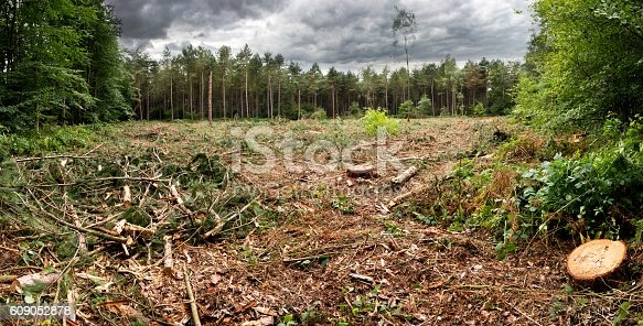 istock Cut forest 609052878