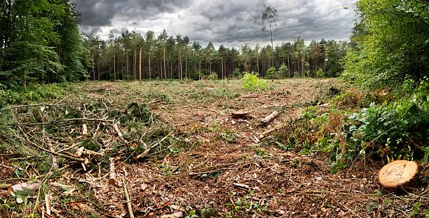 Cut forest Wide view on the cutted forest deforestation stock pictures, royalty-free photos & images