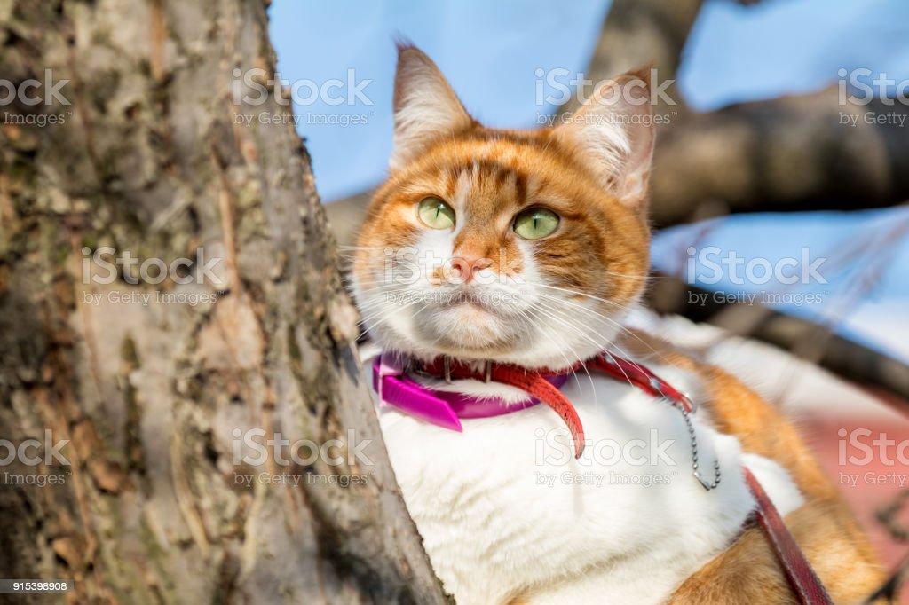Schneiden Sie Lustige Weiss Und Rot Auf Dem Baum Geringe