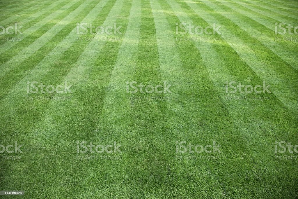 Cut Grass... royalty-free stock photo