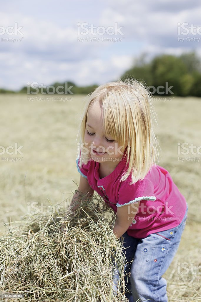 Cut Grass... stock photo