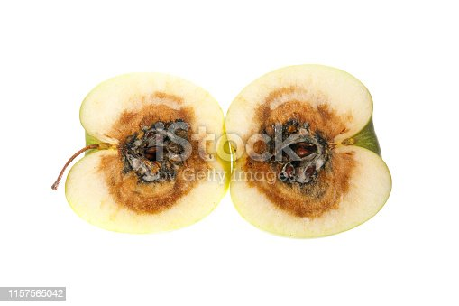 Cut in half rotten apple isolated on white background
