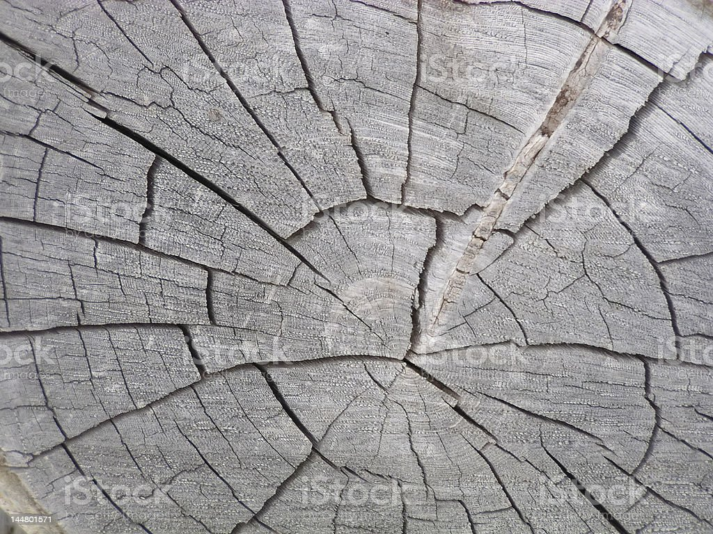 Cut Log with Cracks stock photo