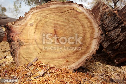 istock cut logs for winter 1068268158