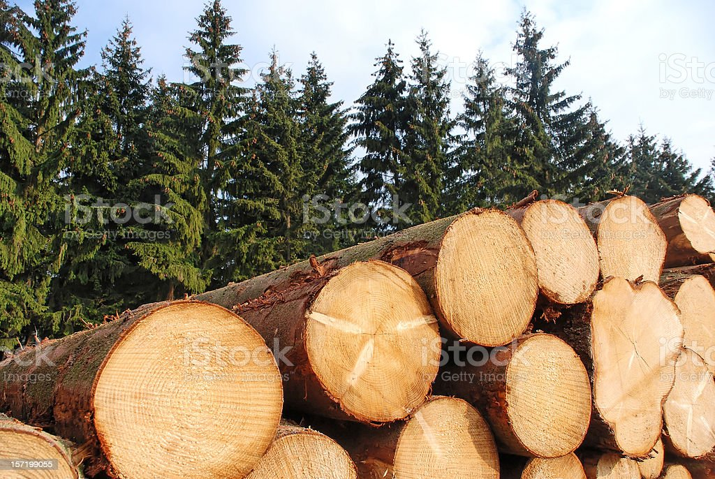 Cut logs stacked in front of pine trees stock photo