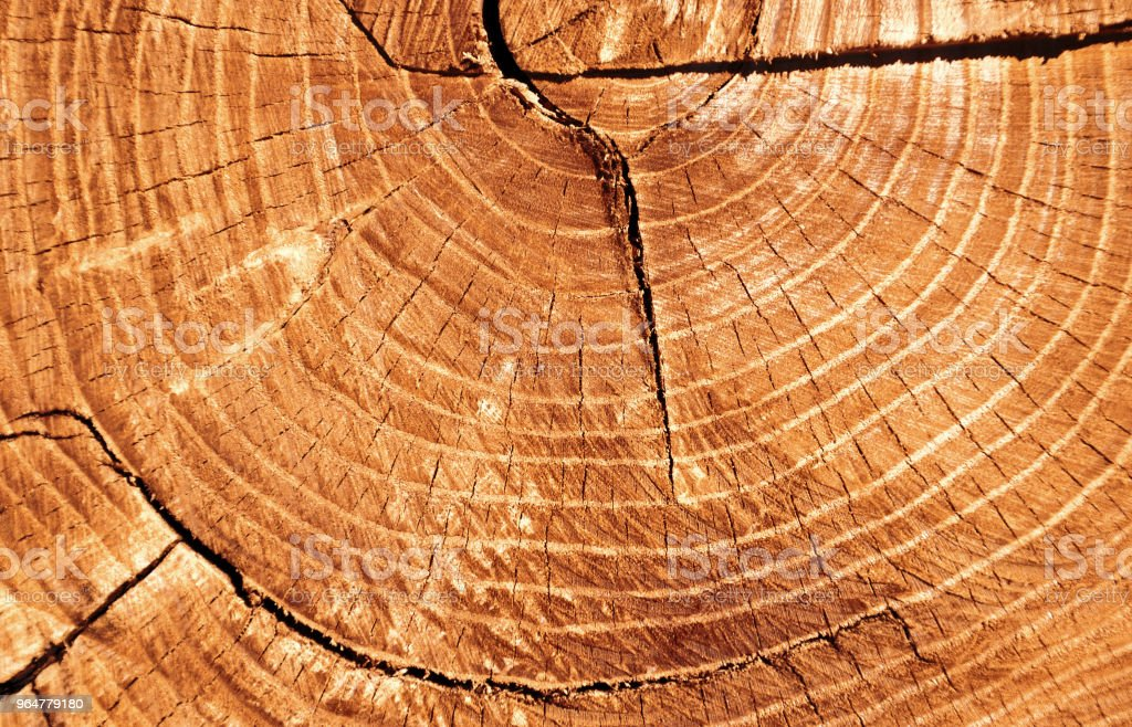 cut of a tree royalty-free stock photo