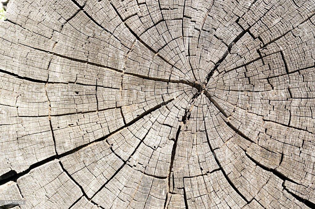 Cut of a trunk of an old tree - foto de stock