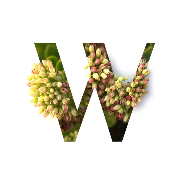 Cut out letter W with growing plant inside. Part of the alphabet. Cut out letter W with growing plant inside. Part of the alphabet. letter w stock pictures, royalty-free photos & images