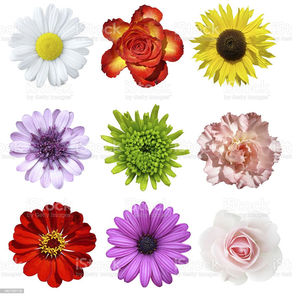 Cut Out Of Different Kinds Of Flowers Stock Photo ...