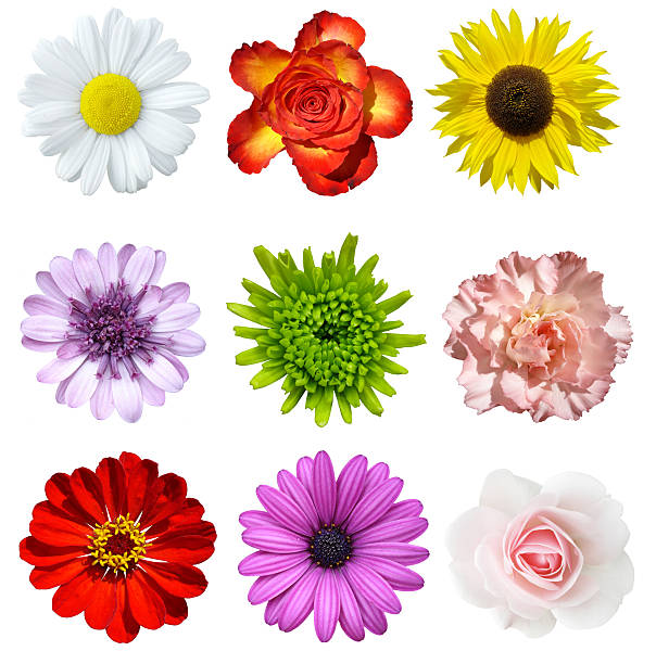 Different Types Of Flowers: Royalty Free Flower Bed Top View Pictures, Images And